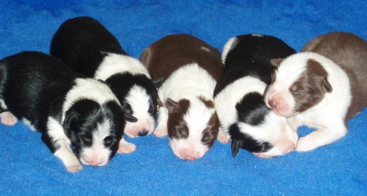Litter 4 days old