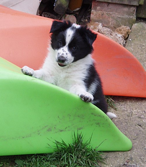 Pie playing on the kayaks.