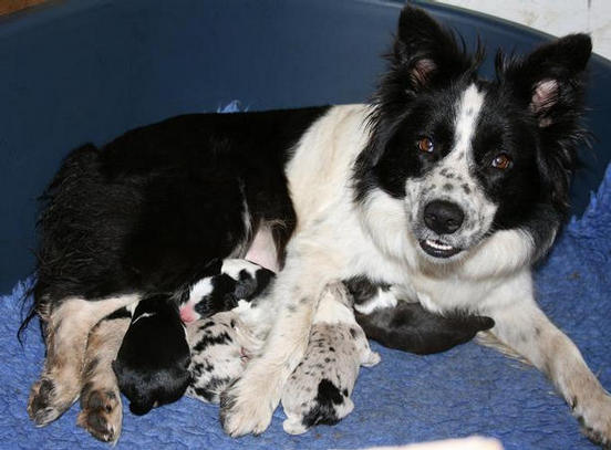 Pie and new born pups.