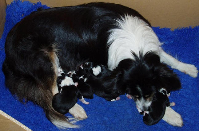 Pimms and newborn pups (10.5.06)