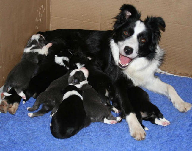 Raven and pups @ 2 1/2 weeks of age