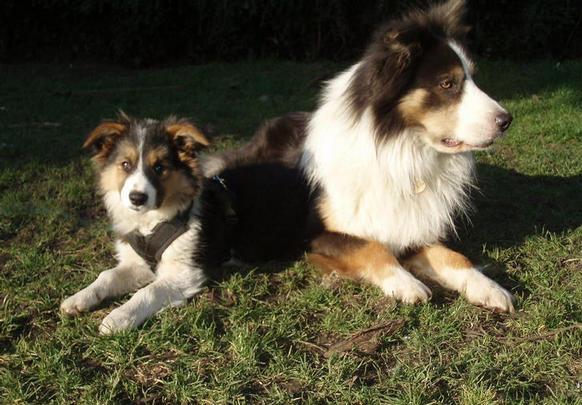 Teddy and Mac enjoying the spring sunshine (Feb 15th 08)