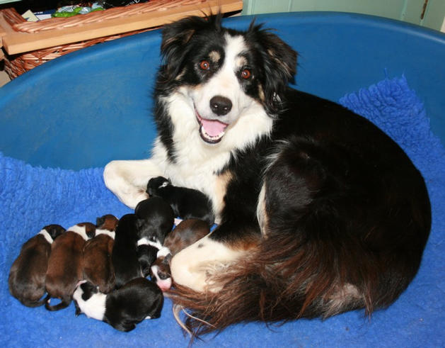 Honey looking very happy with her brood.