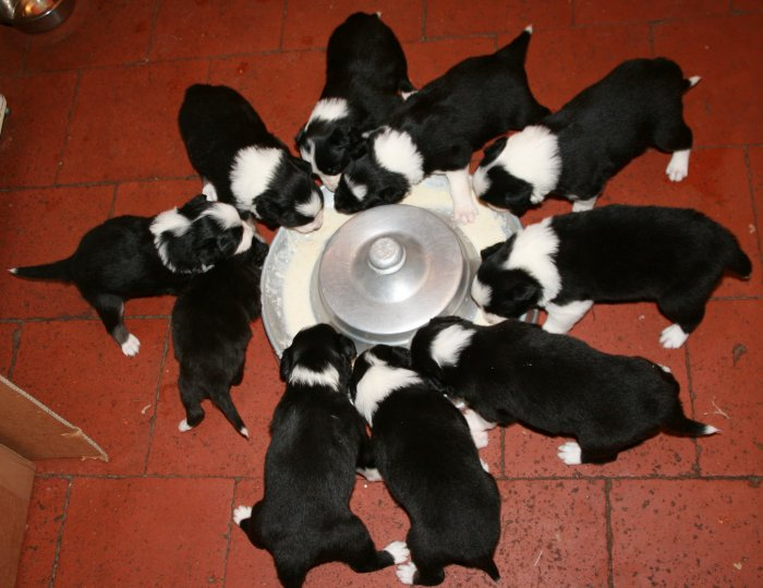 Day 24: Pups eating.