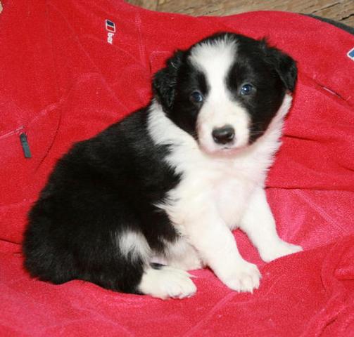 Black & White boy @ 4 weeks