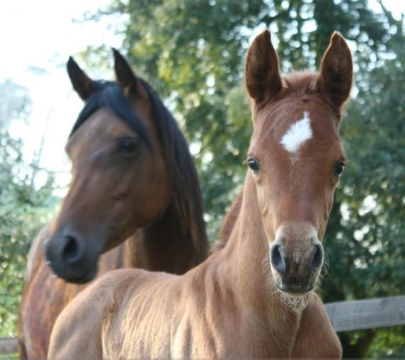 Volante and her Shaka colt