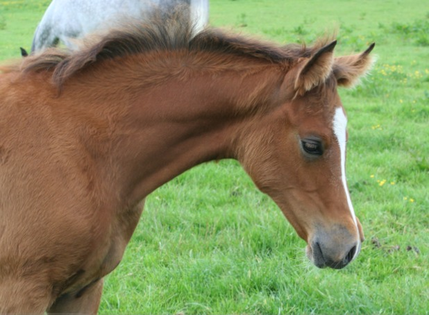 Daphne filly