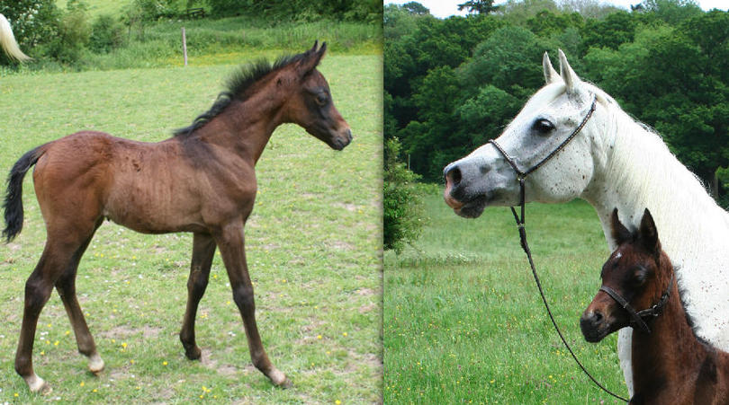 madilly and foal