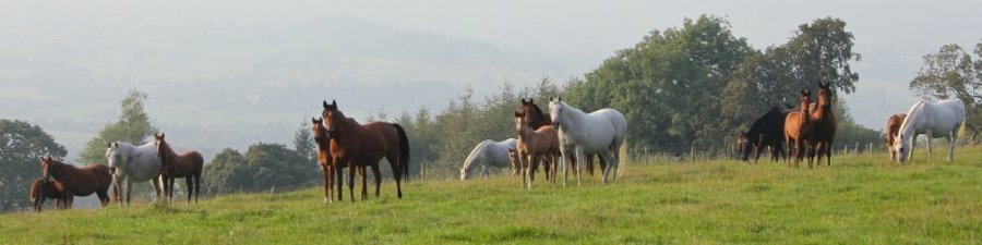 Mares & foals in the field