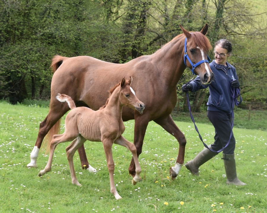 Olivia with her new filly by Psyche's Spirit
