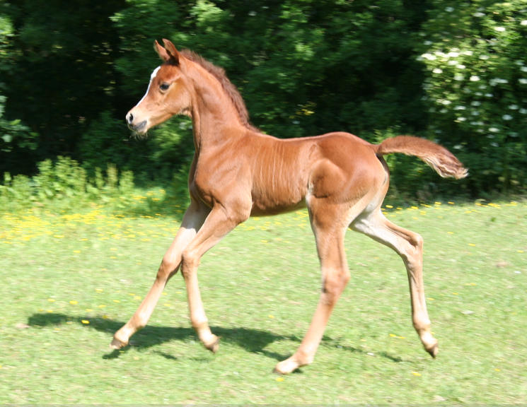 kamono filly