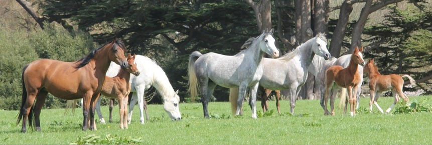 mares and foals in the park