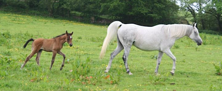 mare & foal??