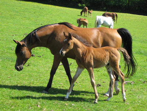 Vienna and foal