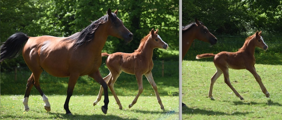 Vienna and her filly
