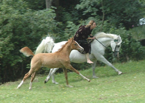 Sasha riding Anastasja with her foal alongside