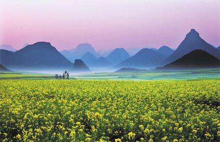 China's rapeseed blossoms this Spring.