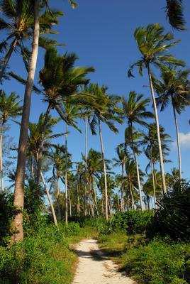 Track among the palms at Kilifi