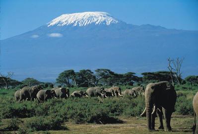 Amboseli National Park near Mount Kilimanjaro