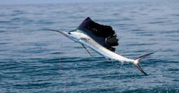 Enjoy a Kilifi Fishing Experience