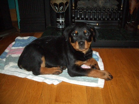 Sheba, aged 3 months - Loved and adored by Geraldine Whelan