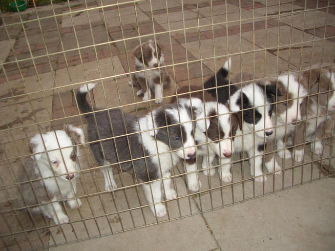 Bundle litter at 6 weeks