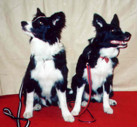 Skye & Breeze at  Discover Dogs 2002