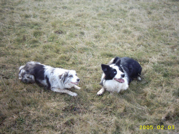 Saffy with her friend Beau