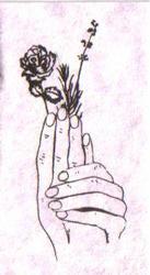 hands holding lavender