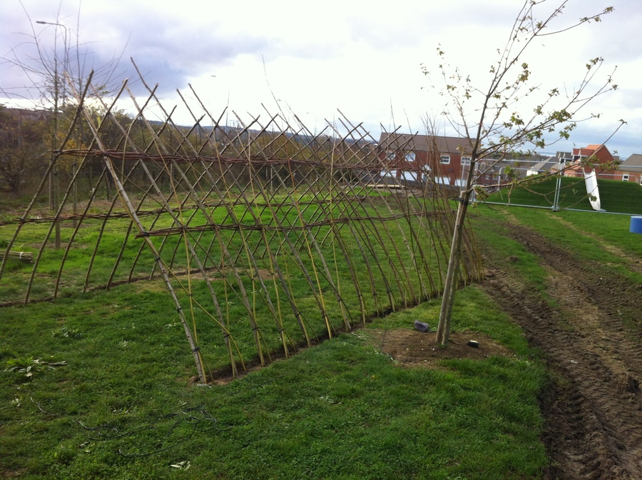 A Living Willow Tunnel being planted yesterday in a Community Garden in Herne Bay..