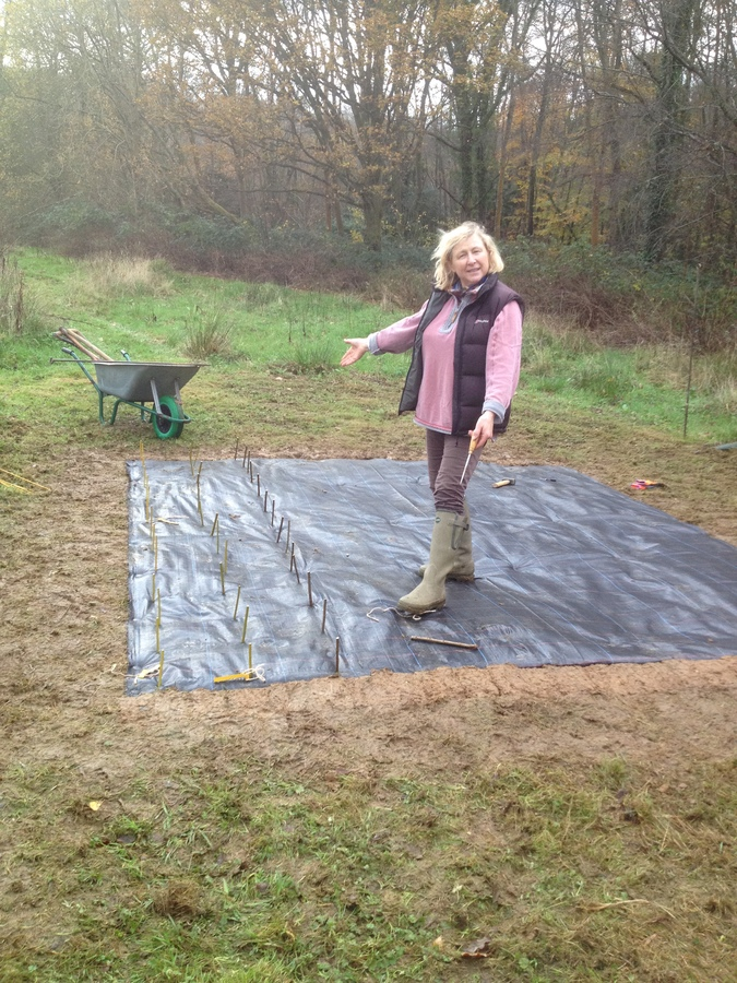 Elaine laying out the membrane for the willow osier bed.