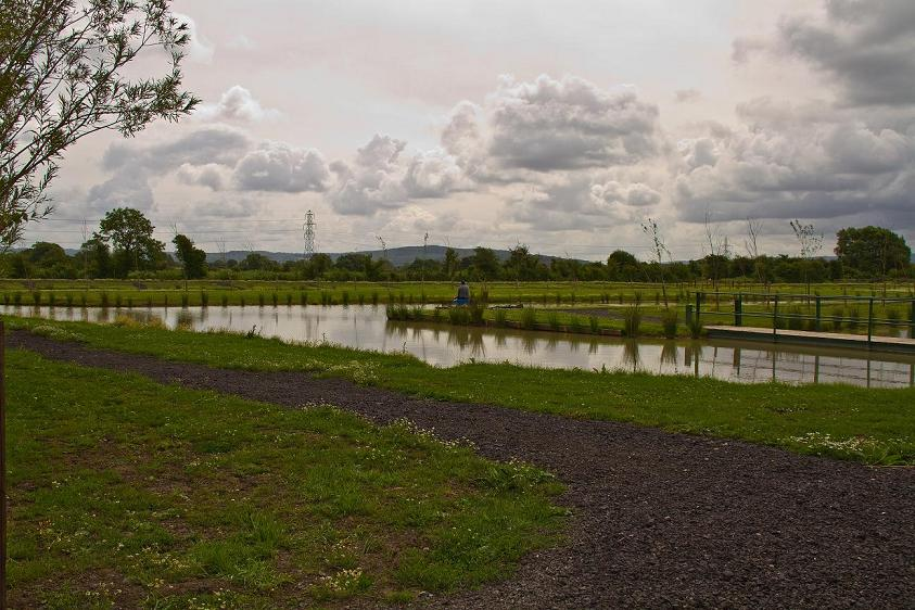 The Paddocks Match Pond
