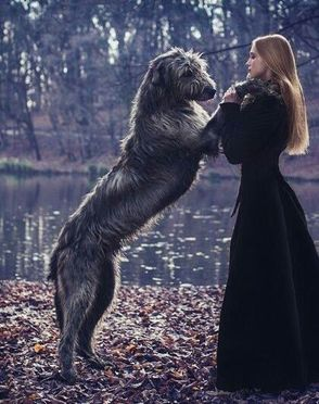 Wolfhound and Girl