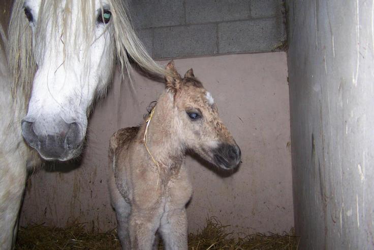 Pabbey's filly foal
