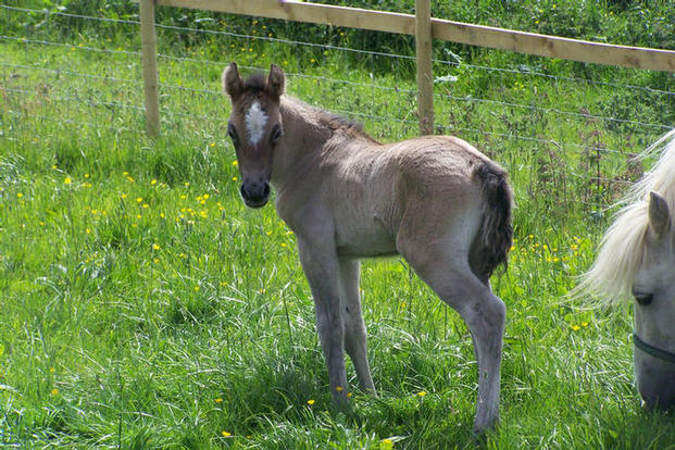 Trowan Violets colt foal
