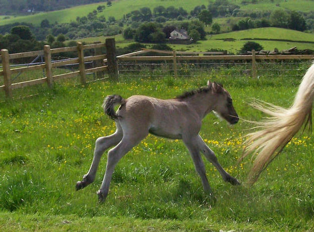 colt foal out of Violet
