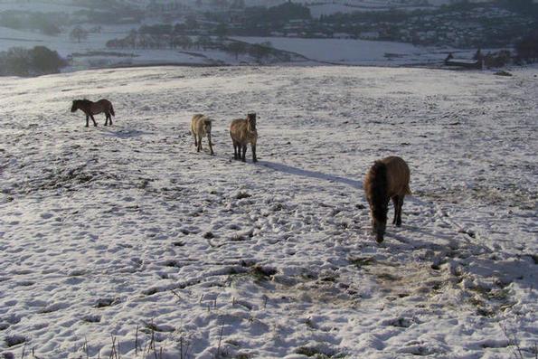 Colt foals