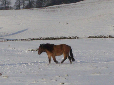 Pearl 2 year old filly