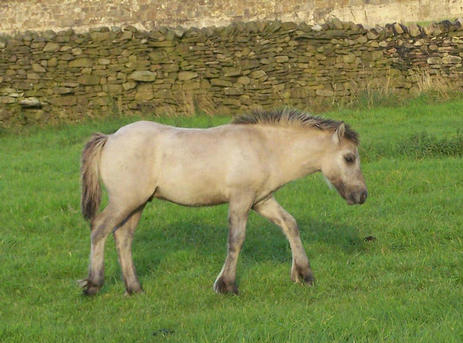 Valerock Velvet's colt foal.  Valerock Victory