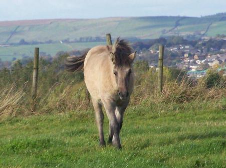 Valerock Sweet Briar's filly foal.  Valerock Claudene
