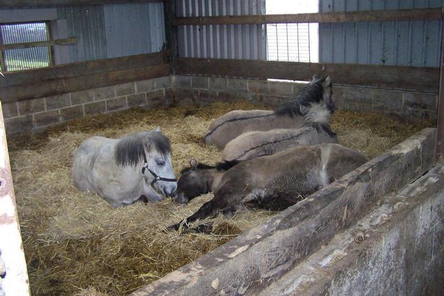 Colt foals having a snooze