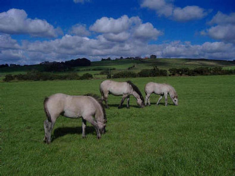 Ponies at Cockerley Fold Farm