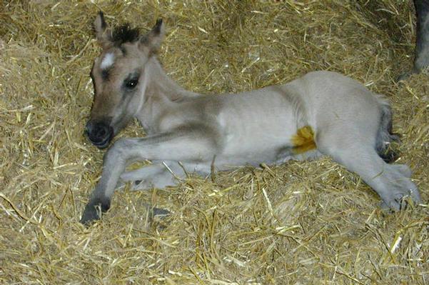 Beaulys filly foal by Drumochter