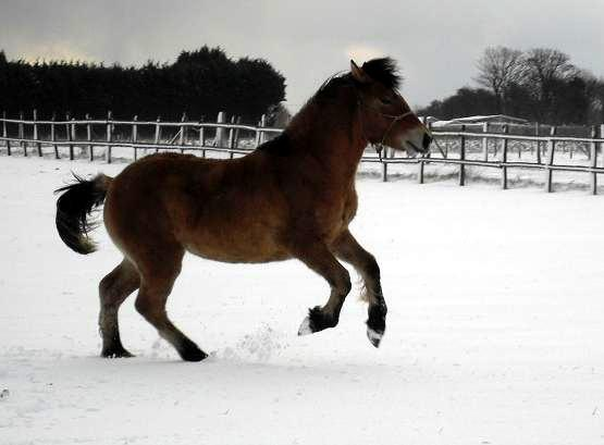Valerock Miss Brodie in snowy Kent
