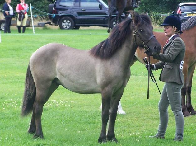 Valerock Ambassador yearling colt
