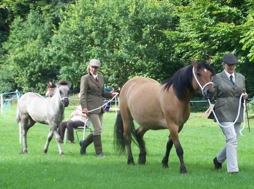 Valerock Miss Brodie and her filly foal Bridget