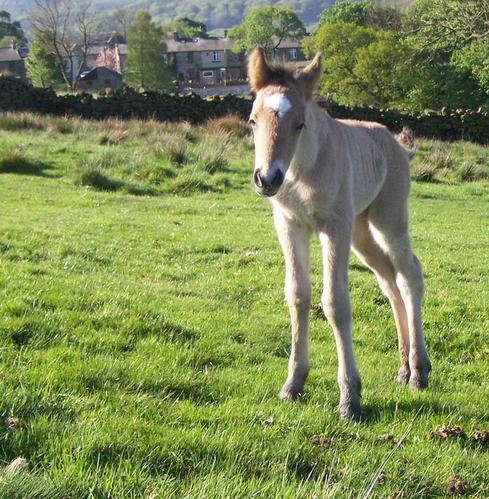 Bryonys colt foal