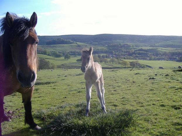 Rubys filly foal