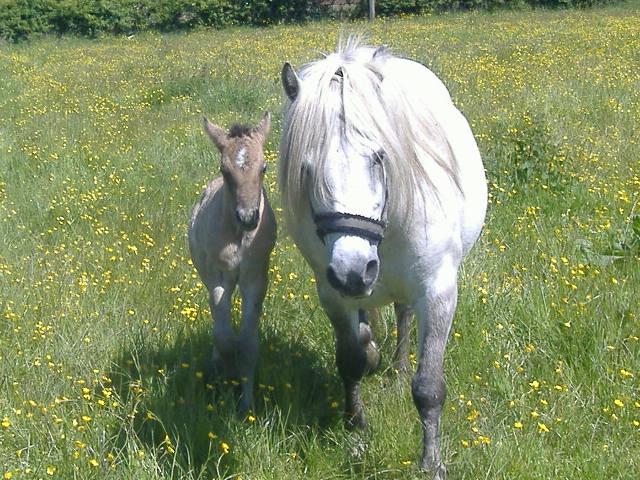 Trailtrow Rhuanns colt foal