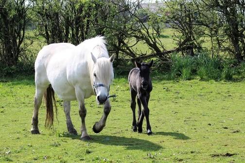 Trailtrow Rhuann's filly foal.